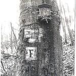 002 Mária-kút 1984_eredmény