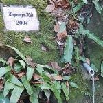 Koponya-kút_150