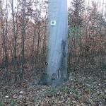 Koponya-kút tisztítás_19