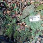 Koponya-kút tisztítás_23
